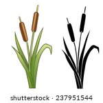 silhouette and color reed... | Shutterstock .eps vector #237951544