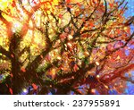 Bright Colorful Leaves On The...