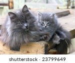 Stock photo lady cat with a kitten 23799649