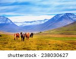 A Group Of Icelandic Ponies In...