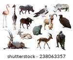 african animals. isolated on... | Shutterstock . vector #238063357