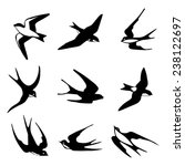 Stock vector set of black isolated vector silhouettes of birds barn swallow swift house martin vector 238122697