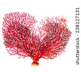 Pink Coral Isolated On White...