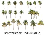 Difference Of Coconut Tree...