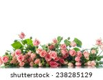 Stock photo beautiful bouquet of pink roses on a white background 238285129