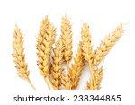 wheat ears on white background | Shutterstock . vector #238344865
