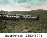 Jerusalem  Shepherd Going...