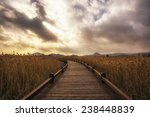 a small pathway in suncheon... | Shutterstock . vector #238448839