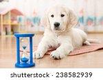 training of golden retriever... | Shutterstock . vector #238582939