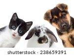 puppy and kitten and rabbit | Shutterstock . vector #238659391