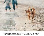 beagle puppy running on the sea ... | Shutterstock . vector #238725754