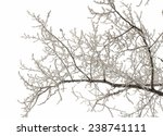 Branches Of Trees Brought By...