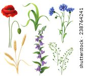 Set Of Different Wildflowers ...