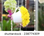 yellow chrysanthemum flower... | Shutterstock . vector #238774309