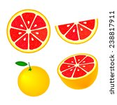 collection of grapefruits ...   Shutterstock .eps vector #238817911