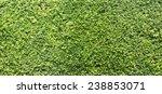 Green Tree Wall Texture