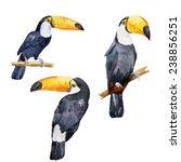 Toucan  Bird  Watercolor
