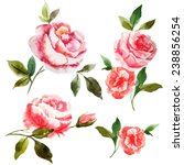 Rose  Watercolor  Shabby Chic