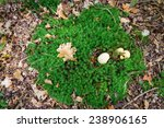 Patch Of Moss With An Earth...