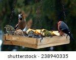 Beautiful Group Of Winter Bird...