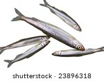 a close up the fishes smelt. | Shutterstock . vector #23896318