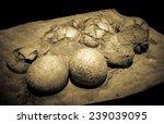 Dinosaur Eggs In The Nest  ...