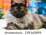 funny cat | Shutterstock . vector #239165899