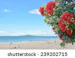 Pohutukawa Red Flowers Blossom...