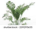 palm tree | Shutterstock . vector #239295655