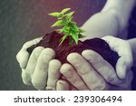 hand and plant | Shutterstock . vector #239306494