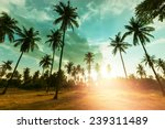 palm plantation on tropical... | Shutterstock . vector #239311489