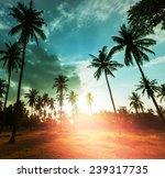 palm plantation on tropical... | Shutterstock . vector #239317735