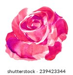 Stock photo pink rose watercolor hand painted isolated on white 239423344