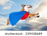 a funny bulldog dressed as a... | Shutterstock . vector #239438689