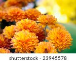 Beautiful Yellow And Orange...