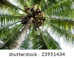 a background abstract of a palm ... | Shutterstock . vector #23951434