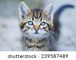 little kitten and bokeh  a... | Shutterstock . vector #239587489