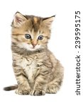 Stock photo striped kitten sitting with astonishment looks in the side down 239595175