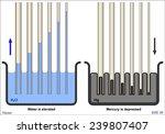 capillary action of water... | Shutterstock .eps vector #239807407