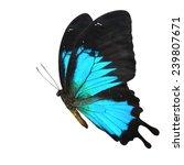 Beautiful Blue Butterfly Flyin...