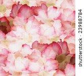 cloud pink and red desert rose... | Shutterstock . vector #23988784