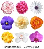 Collection of nine flowers isolated on white - stock photo
