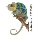 Ambanja Panther Chameleon ...
