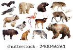 set of bear and other european... | Shutterstock . vector #240046261