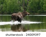 Small photo of Alaskan Moose In Lake