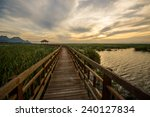 evening on a wooden walkway in... | Shutterstock . vector #240127834