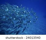 large group of fish or school... | Shutterstock . vector #24013540