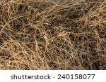 Dry Grass.