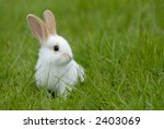 white rabbit on the grass.... | Shutterstock . vector #2403069