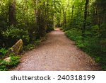 Trail In Great Smoky Mountains...